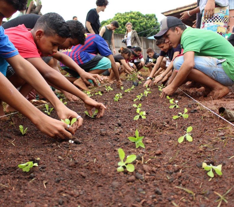Cinco motivos para ter uma horta na escola